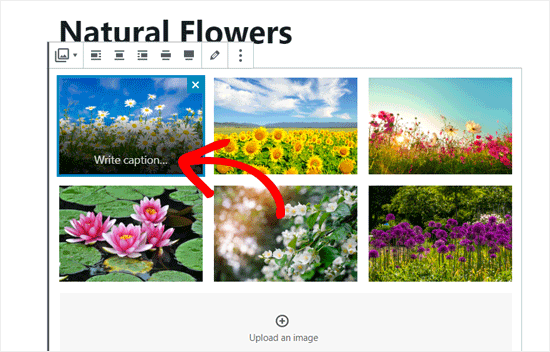 Write Captions in Your Gallery Images