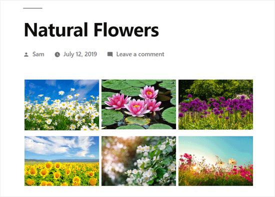WordPress Photo Gallery Created with Envira Gallery