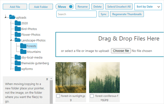 The uploaded images showing in the Forests folder
